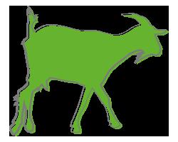 Chèvre Caste Bio